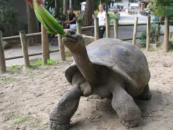 Tortoise at the Newport Aquarium